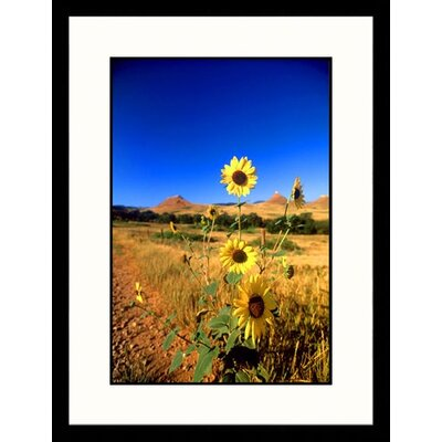 Wild Sunflowers, South Dakota Framed Photograph - John Coletti