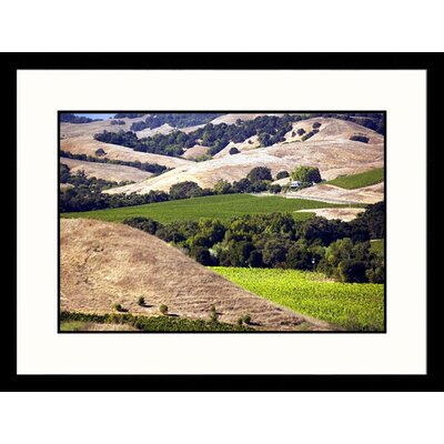 Vineyard View Artea Winery, Napa Valley Framed Photograph - Walter Bibikow