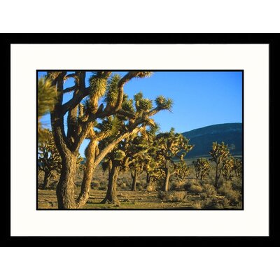 Great American Picture Joshua Tree Forest Grand Canyon West, Arizona Framed Photograph - Jared McMillen