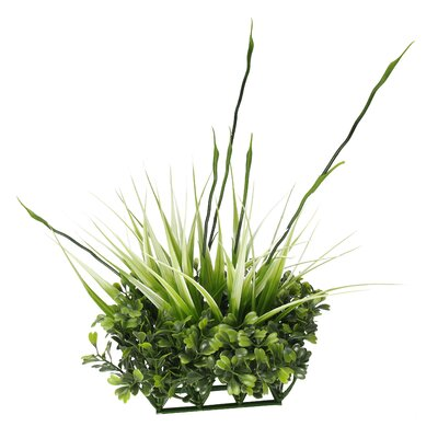 Fluval Chi Boxwood and Tall Grass Aquarium Ornament