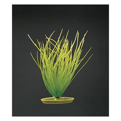 Hagen Marina Aquascaper Hairgrass Plant Decoration