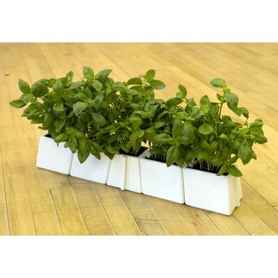 VItamin X-Tray Flower Pot