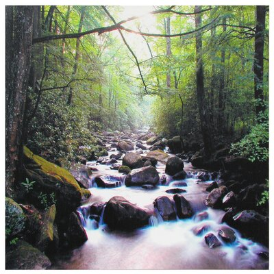 River of Life Canvas Wall Art - 19.75