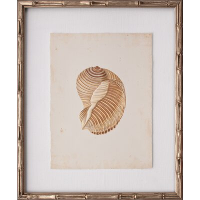 Mini Martini Shell I Framed Graphic Art