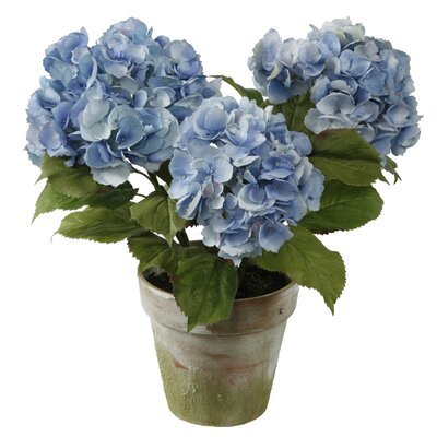 Winward Designs Potted 3 Stem Hydrangea