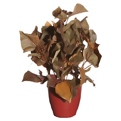 Vickerman Co. Floral Artificial Potted French Ivy Desk Top Plant in Pot
