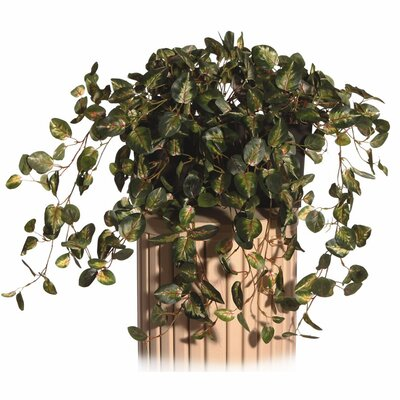 Vickerman Co. Floral Pepperomia Desk Top Plant in Decorative Vase