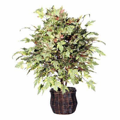 Vickerman Deluxe Artificial Potted Natural Frosted Maple Tree in Basket