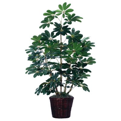 Vickerman Deluxe Artificial Schefflera Tree in Basket