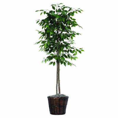 Vickerman Designer Artificial Potted Natural Ficus Tree in Basket