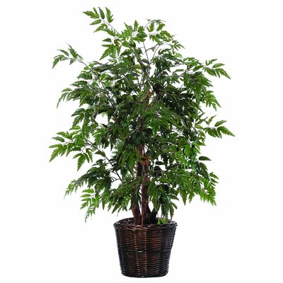 Vickerman Bushes Artificial Potted Natural Ming Aralia Tree in Basket