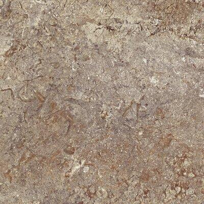 """Congoleum DuraCeramic Renaissance 15.63"""" x 15.63"""" Vinyl Tile in Portobello"""