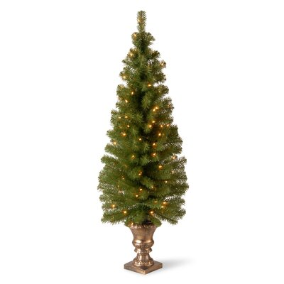National Tree Co. Montclair Entrance 5' Green Spruce Artificial Christmas Tree with 100 Pre-Lit Clear Lights with Urn Base