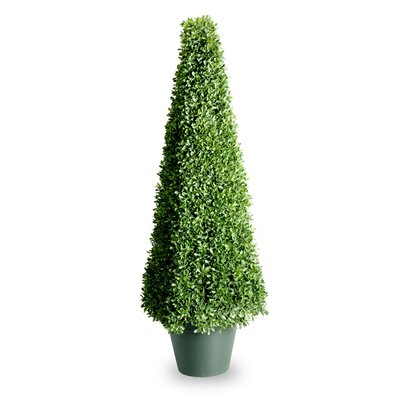 National Tree Co. Boxwood Square Topiary in Pot