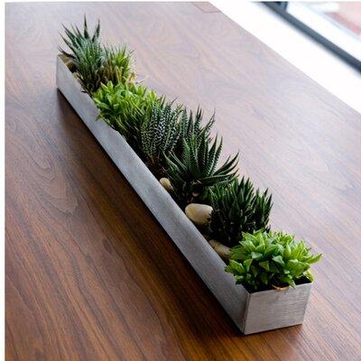 gus modern rectangular fruit trough planter allmodern. Black Bedroom Furniture Sets. Home Design Ideas