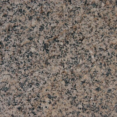 "MS International 12"" x 12"" Polished Granite Tile in Desert Brown"
