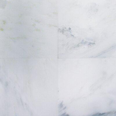 "MS International 6"" x 6"" Honed Marble Tile in Arabescato Carrara"