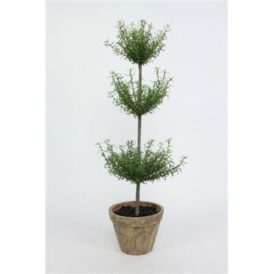 Sage & Co. Potted Rosemary Triple Topiary