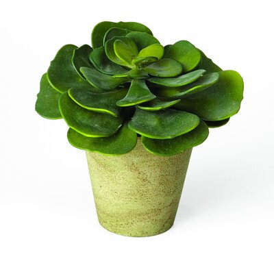 Sage & Co. Sonoran Highlands Echeveria Succulent Desk Top Plant in Pot