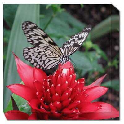 Black and White Butterfly Outdoor Canvas Art