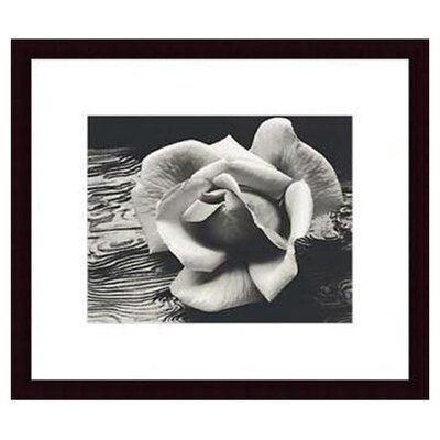 Barewalls Rose and Driftwood by Ansel Adams Wood Framed Art Print