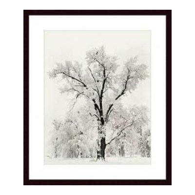 Barewalls Oak Tree by Ansel Adams Wood Framed Art Print