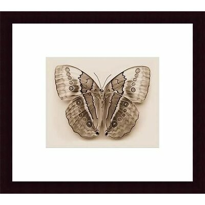 Barewalls Stichopthalma Louisa Wood Framed Art Print