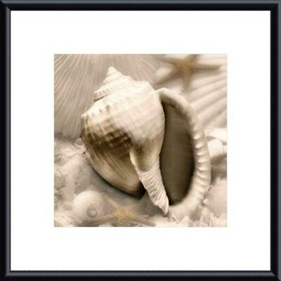 Iridescent Seashell III by Donna Geissler Metal Framed Art Print