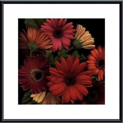 Jubilee I by S. Rose Framed Photographic Print
