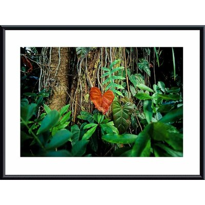 Rain Forest Metal Framed Art Print