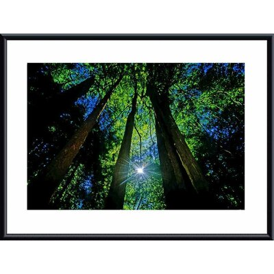 Forest Canopy Metal Framed Art Print