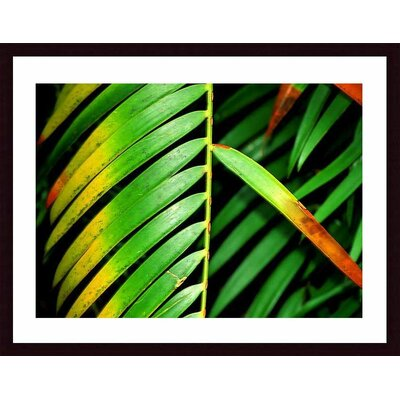 Colorful Palm Leaf Wood Framed Art Print