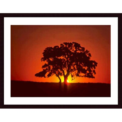 Barewalls Sunset and Oak Wood Framed Art Print