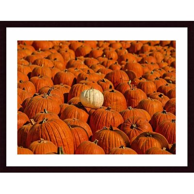 Barewalls White Pumpkin Wood Framed Art Print