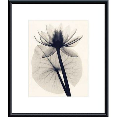 Barewalls Tropical Water Lily by Judith McMillan Metal Framed Art Print