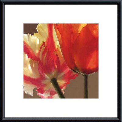 Soiree IV by S. Rose Framed Photographic Print
