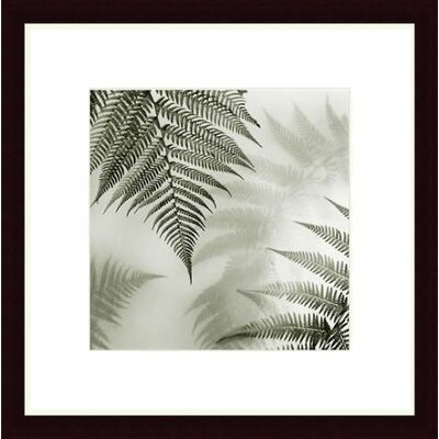 Barewalls Ferns No. 1 Wood Framed Art Print