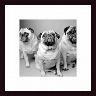 Barewalls Three Pugs Wood Framed Art Print