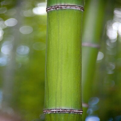 Deco Glass Bamboo II Wall Decor