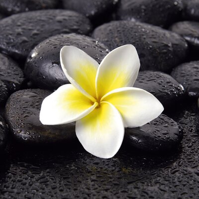 Deco Glass Jasmine Fragrance Wall Decor