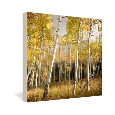 DENY Designs Aspen by Bird Wanna Whistle Photographic Print on Canvas