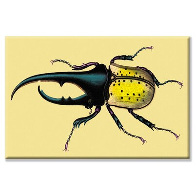 Horned Beetle #2 by William Jardine Graphic Art on Canvas