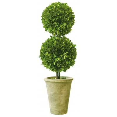 Mills Floral Box Double Ball Topiary