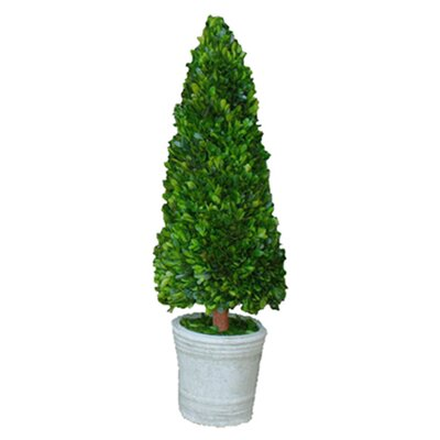 <strong>Mills Floral</strong> Boxwood Cone Topiary in Pot