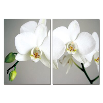 Pure Love White Orchids Modern Wall Art Decoration