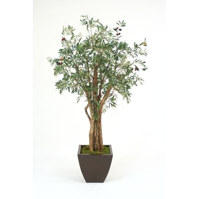 Distinctive Designs 6' Olive Tree in Square Contempo Planter
