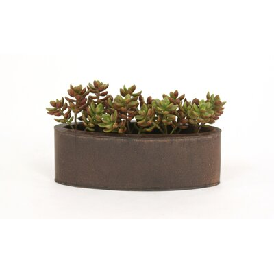 Distinctive Designs Faux Succulents in an Oval Metal Planter