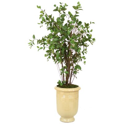 Distinctive Designs Elm Tree in Urn