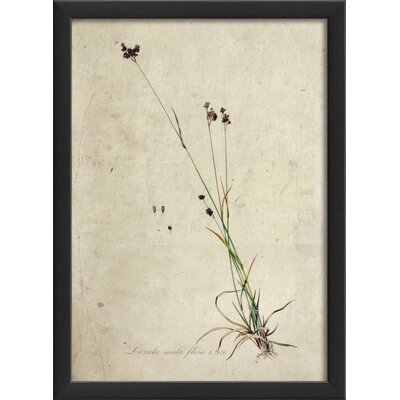 Blueprint Artwork Botanical Framed Art