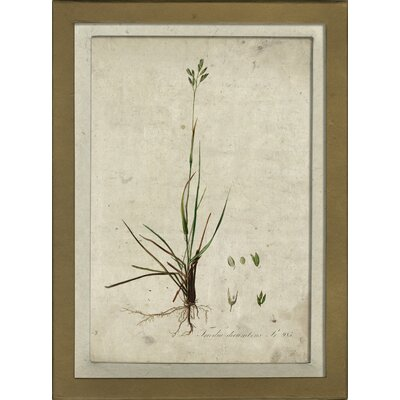 Botanical III Framed Graphic Art